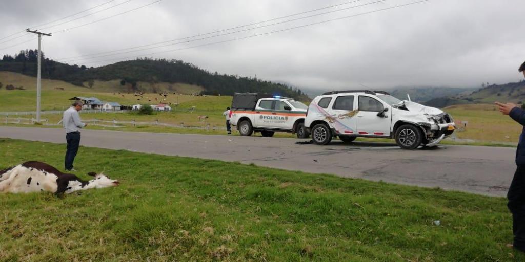 Una vaca yace a orilla de carretera mientras se ve un vehículo liviano con signos de colisión. La Policía de Carreteras de Colombia está en el sitio.